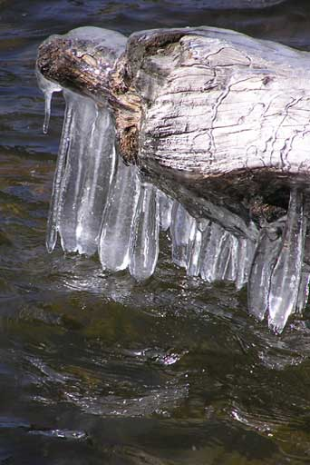 First icicles at Bear Lake, Rocky Mountain National Park, CO
